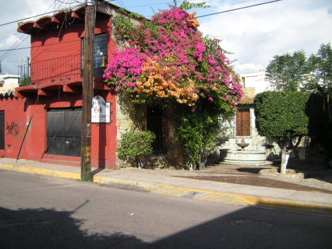 Coloured houses and blooming plants